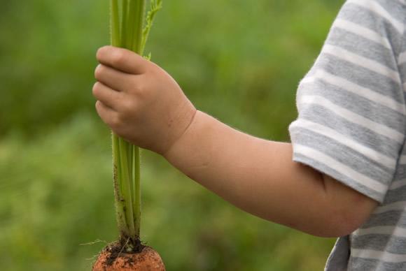 大地を守る会のお試し野菜セットは高品質!にんじんが嫌いな子供も喜んで食べる