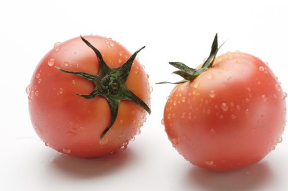 向き合うトマト