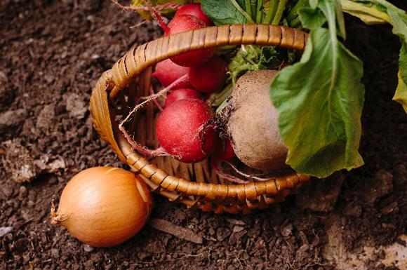 食材宅配は泥つき・土つき野菜が来ることも!泥つき野菜の良さと注意点