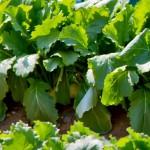 伝統野菜を食材宅配で手に入れる!生産農家が少ない珍しい野菜も買える